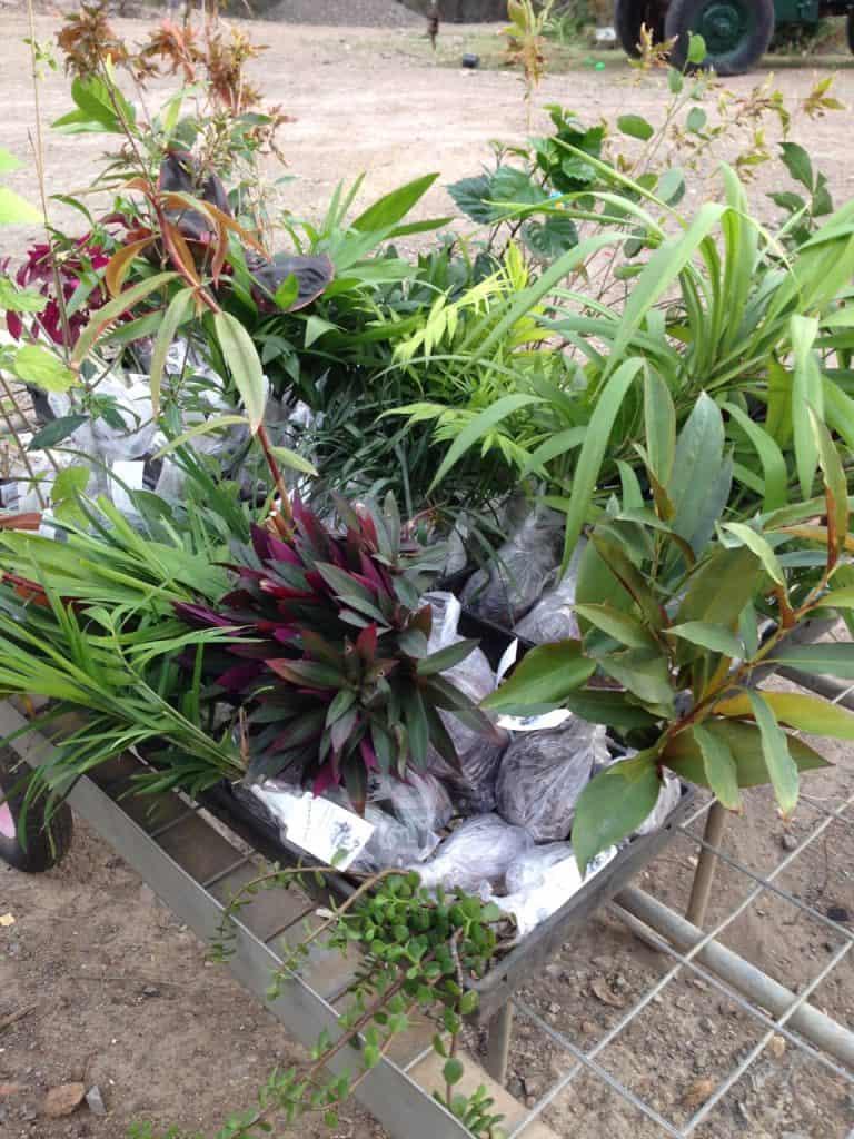 Packed-Nursery-Plants