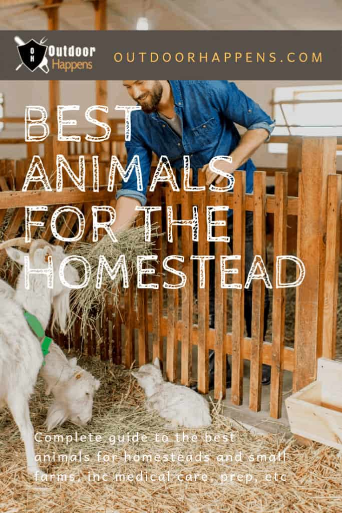 best-animals-for-the-homestead