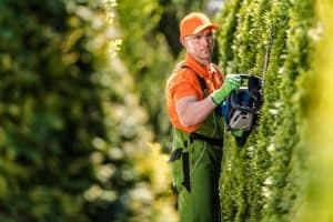 Best Electric Hedge Trimmer Under 50 Bucks [2021 Corded Trimmer Review]