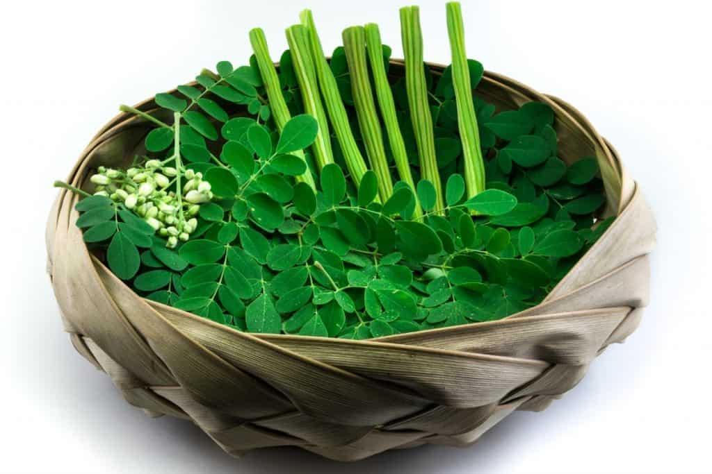 benefits-of-growing-moringa