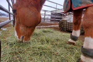 horse-hay-feeder