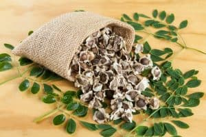 Moringa 101 [Why Everyone Needs a Miracle Tree and How to Grow It]
