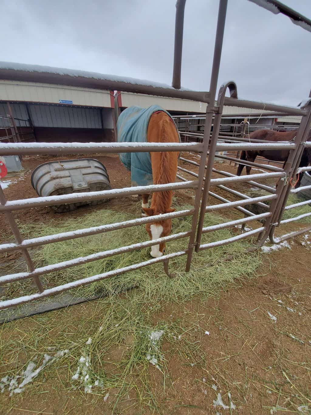 slow-feeders-for-horses