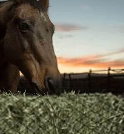 slow-hay-feeder-horses