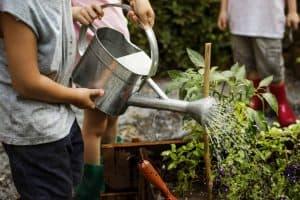 Mittleider Gardening Method - More Food From Your Garden!