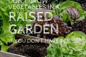 Disadvantages-raised-garden-vegetables