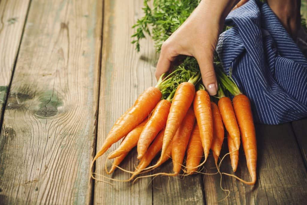 Carrots-survival-garden