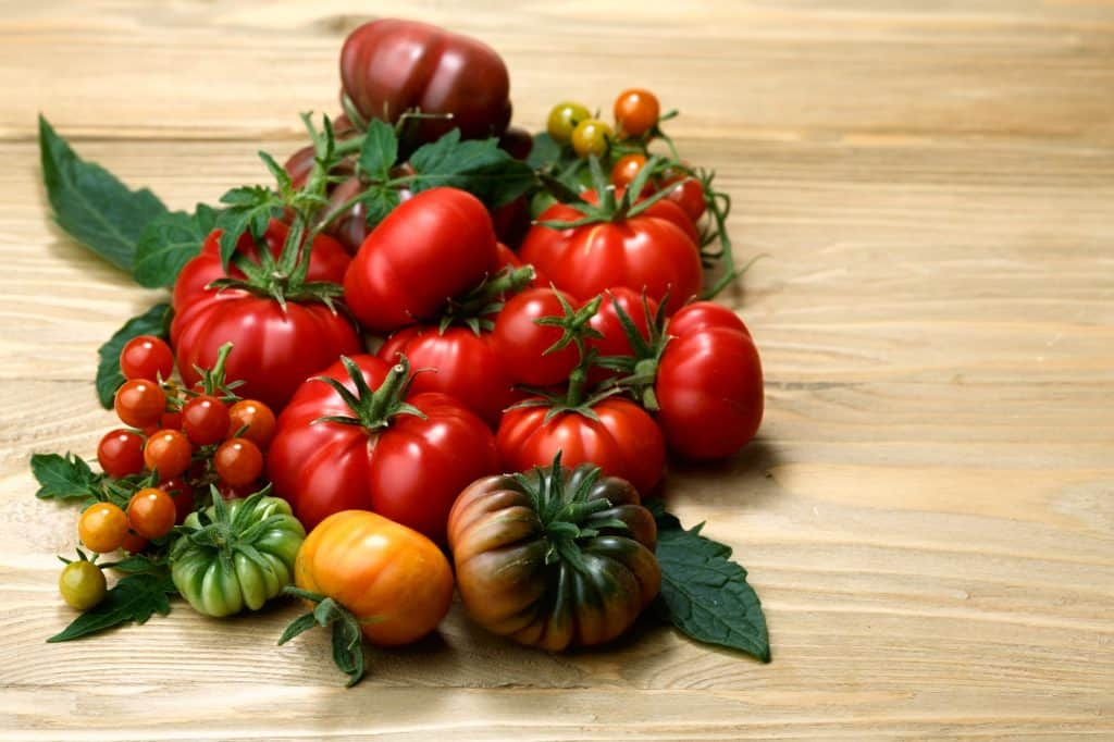 tomatoes-survival-garden
