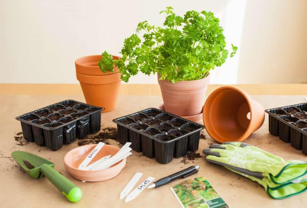 Planting-Saved-Seeds