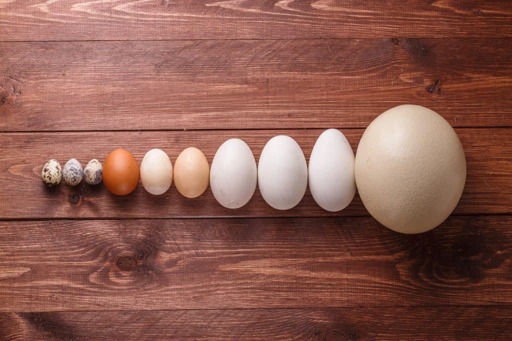 quail-chicken-duck-eggs