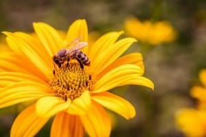 How to Attract Bees to Your Backyard - Attracting Wildlife
