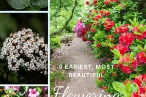 9 Easiest and Most Beautiful Flowering Shrubs for Zones 7 and 8