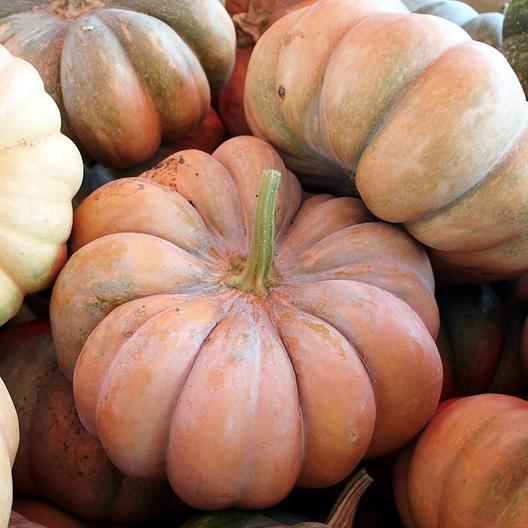 Pumpkin-Fairytale-easy-grow-vegetables