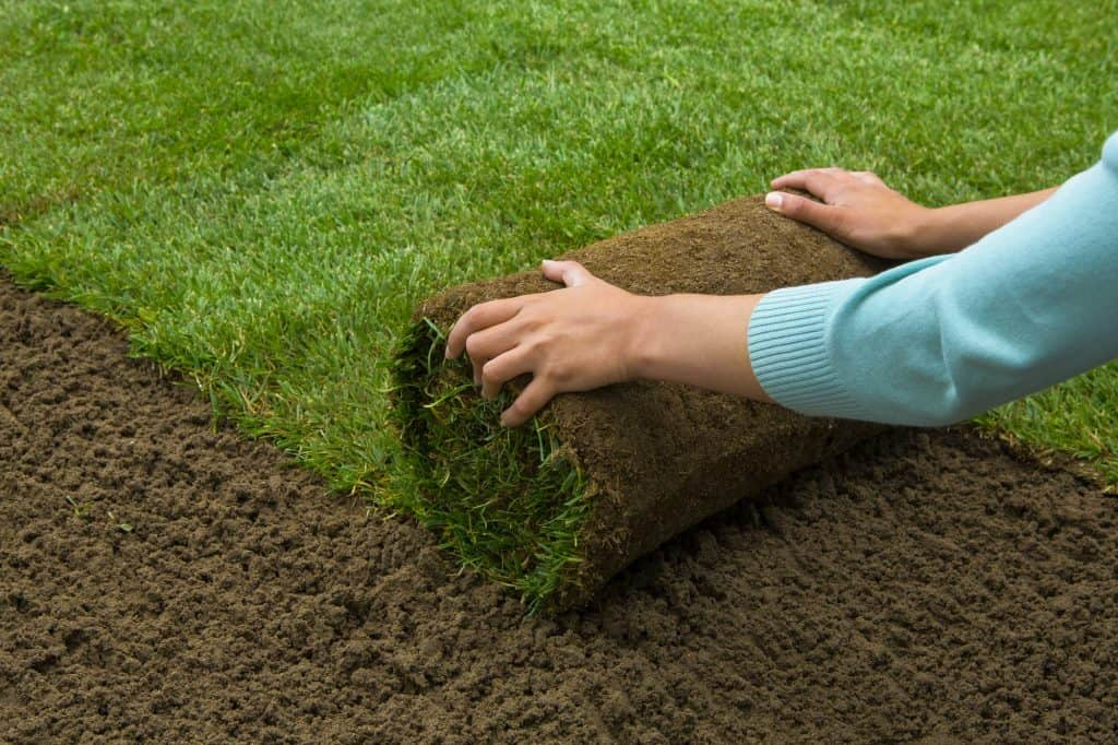 what-is-sod-lawn
