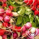 radish-crayon-colors-vegetables-wm_1_800x