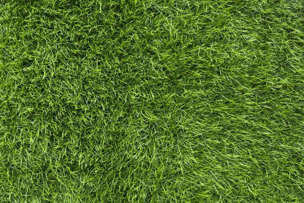 what-type-of-sod-lawn