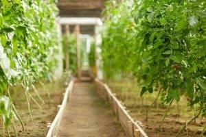 how-deep-should-a-raised-garden-be