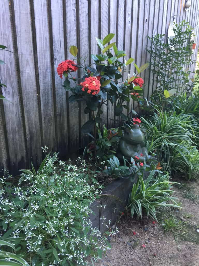 Euphorbia-versatility-flowering-succulents