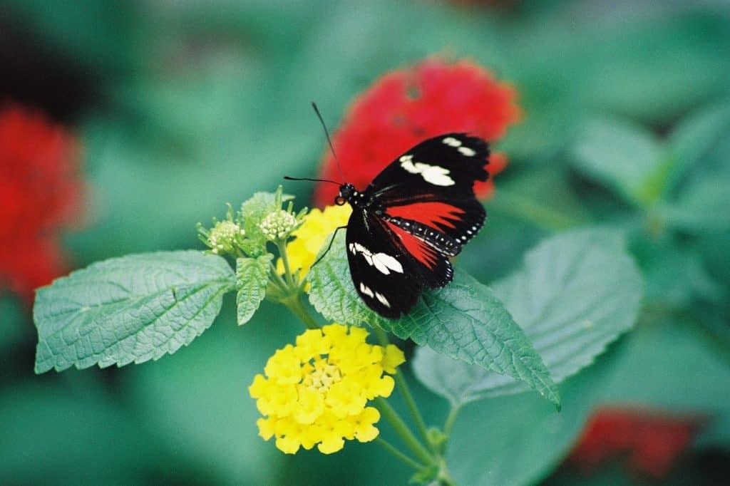 why-attract-butterflies-garden