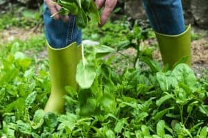 Farming on the Wild Side - Edible Landscaping for People, Pollinators, and Birds