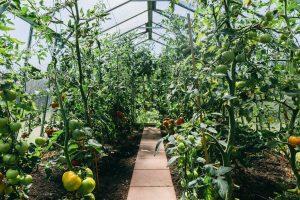 Should You Shade Your Vegetable Garden?