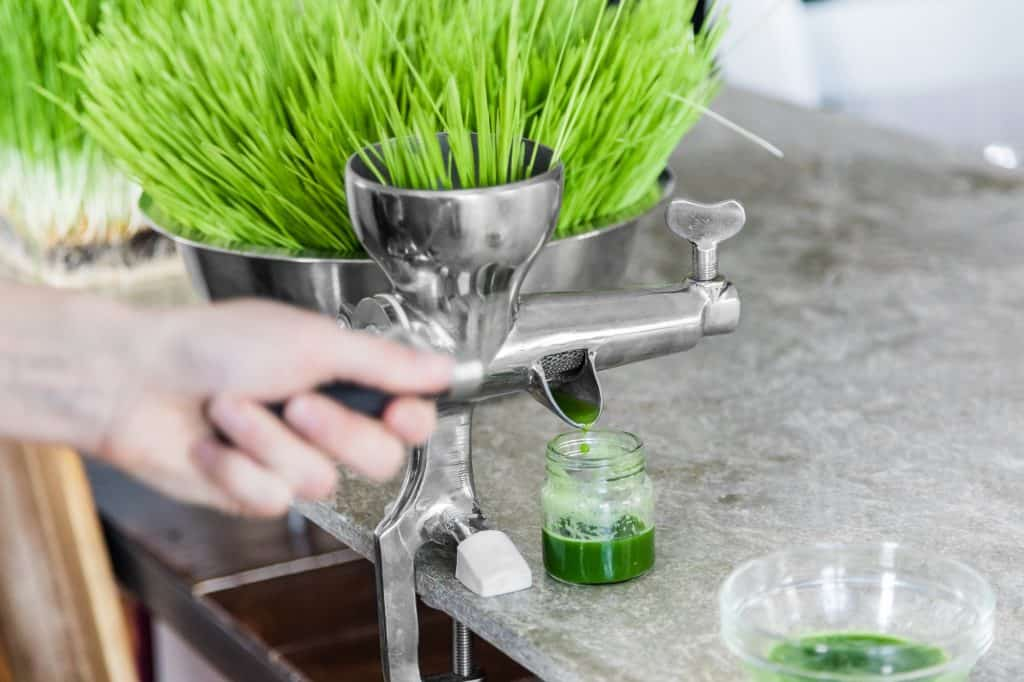 best-wheatgrass-seeds-for-juice