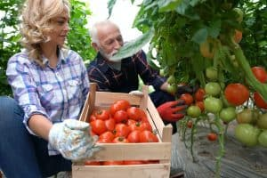 How to Grow an Abundance of Food in Your Backyard (Free Course!)