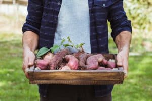 Sweet Potato Companion Plants - Good and Bad Companions