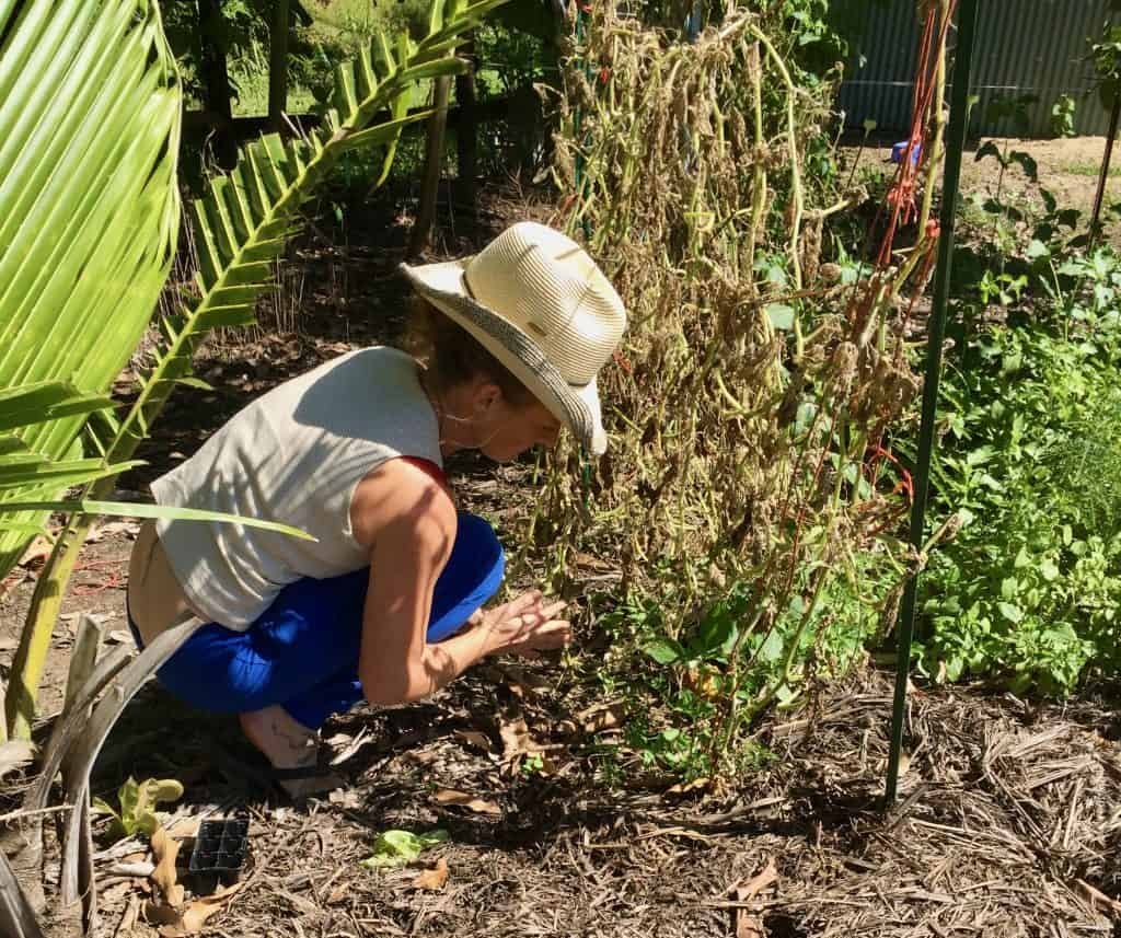 Gardening-homesteading-skills