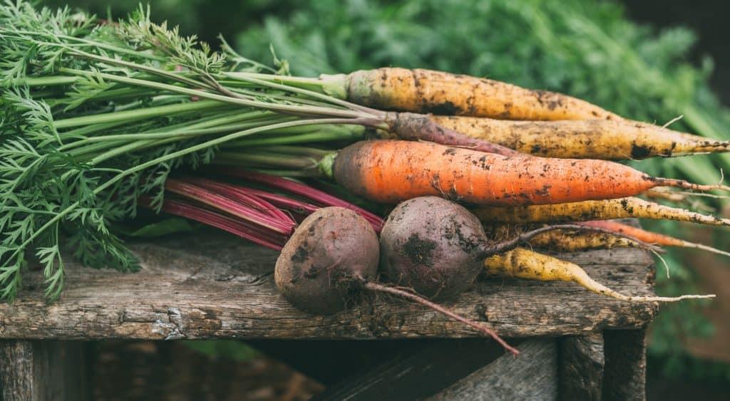 carrots-beets-grow-food-animals