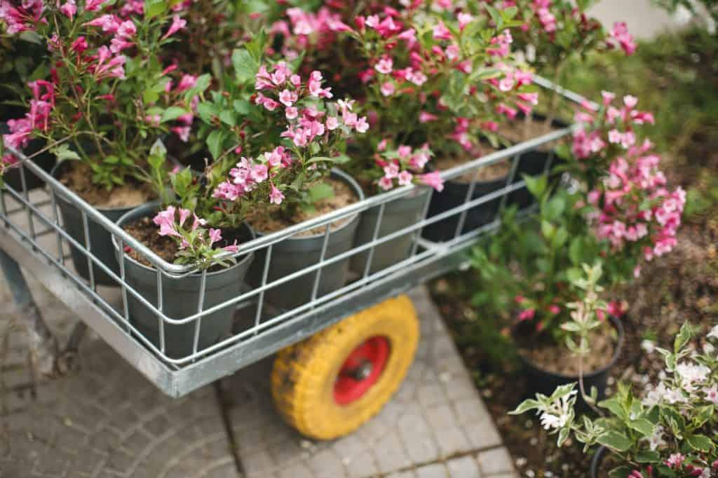 best-garden-cart-buyers-guide