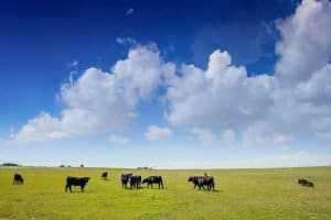 How Many Cows Per Acre Can You Keep In Your State?