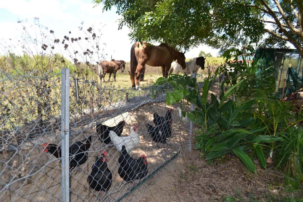build-chicken-coop-homesteading-skills