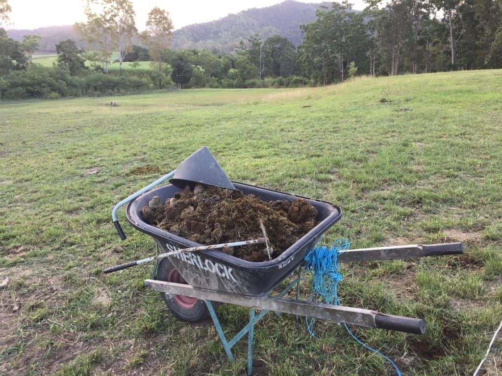 gardening-skills-homestead