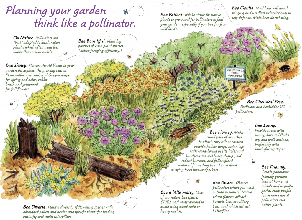 homesteading-skills-pollinators