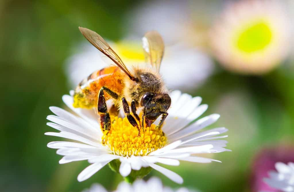 gardening-saves-bees