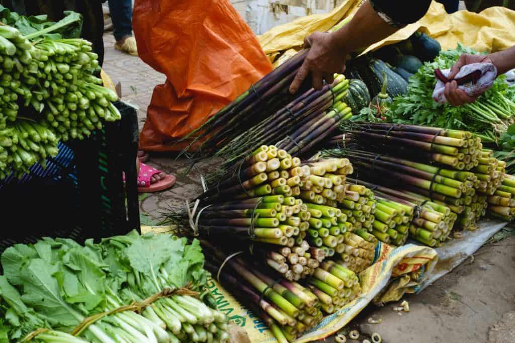 edible-bamboo-farming-shoots