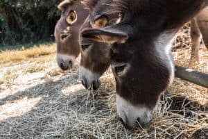 Grow Food and Fodder for Your Animals - How to Do It and What to Grow
