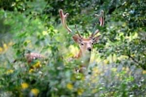 how-keep-deer-out-of-garden