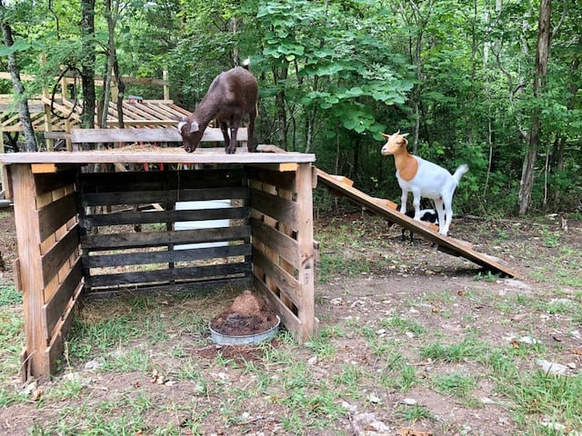 frugal-little-goat-house