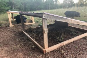 How to Build an Easy Pig Hut Shelter [With Step by Step Instructions]