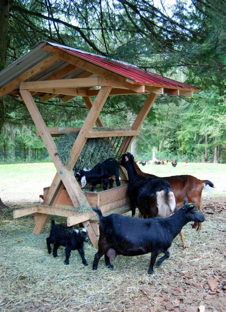 Mobile-Goat-Feeder-shelter