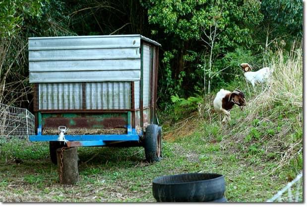mobile-goat-house
