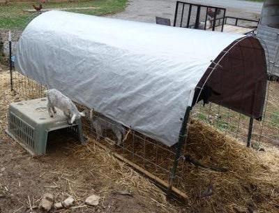 portable-goat-shelter