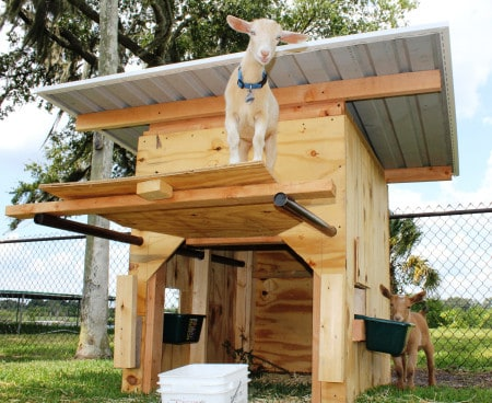 Pickme-Yard-Goat-Tractor-shelter