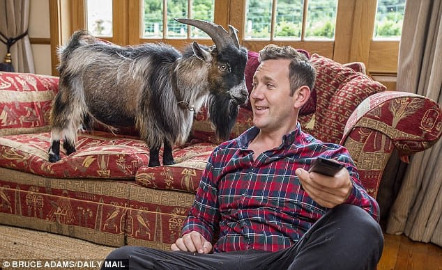 Tom-Horsfield-Benjamin-house-trained-goat