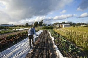 Cultivator vs Tiller - How to Choose the Best One for Your Garden