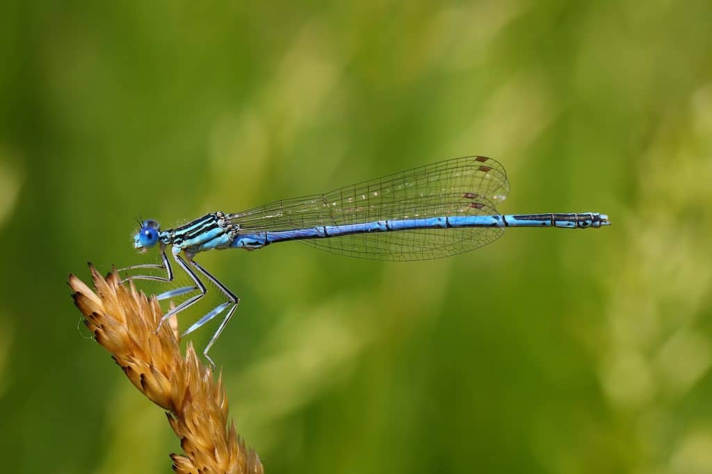 Dragonfly-on-a-plant
