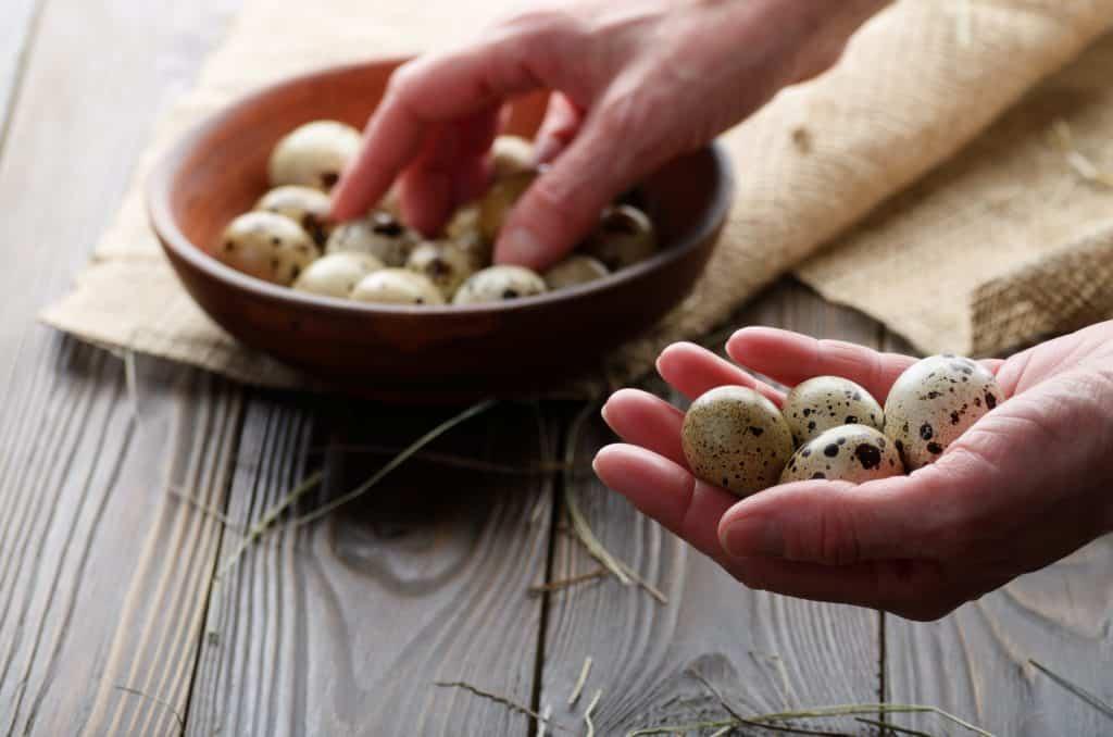 homestead-income-small-farm-profit-quail