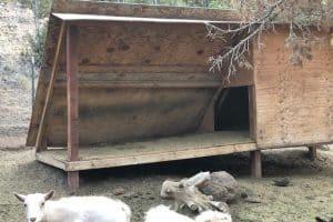 7 Tips for Building the Best Goat Shelter + 6 Goat Shelter Plans